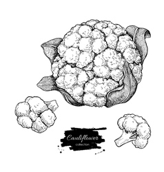 Cauliflower hand drawn vector image vector image