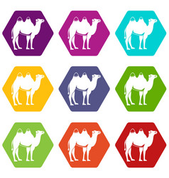 Camel icon set color hexahedron vector