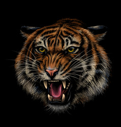 Growling tiger color hand-drawn portrait vector