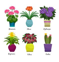 indoor garden plants and flowers vector image vector image