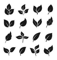 leaf silhouette black set decoration element vector image