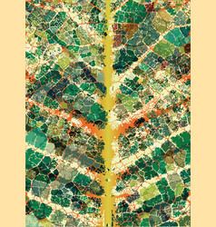 leafy veins vector image