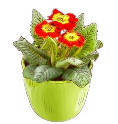 Red primrose in a flowerpot vector image vector image