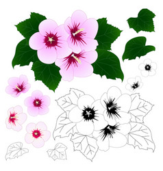 hibiscus syriacus - rose of sharon outline vector image