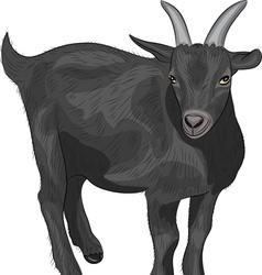 Black goat vector