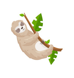 cute sloth hanging on tree branch isolated on vector image