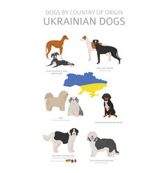 Dogs country origin ukrainian dog breeds vector