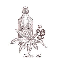 Drawing castor oil vector