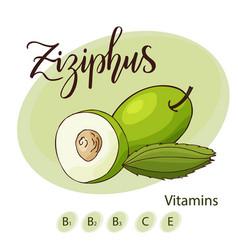 fruit element of ziziphus hand drawn icon vector image