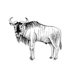 hand drawn wildebeest - antilope gnu vector image