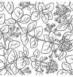 oregano seamless pattern vector image