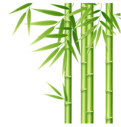 Realistic 3d detailed bamboo shoots vector