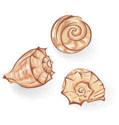 sea seashells vector image