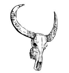Cow skull- hand drawn vector image