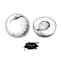 peach drawing isolated hand drawn peach vector image vector image