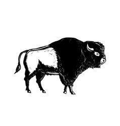 American buffalo side woodcut black and white vector
