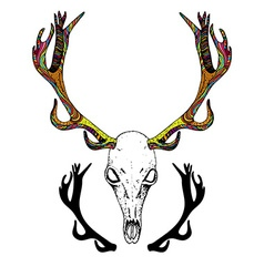 Color Sketch Deer Skull vector image