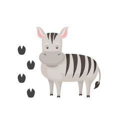 cute zebra and her footprints cartoon character vector image