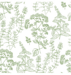 hand drawn herbal sketch seamless pattern vector image