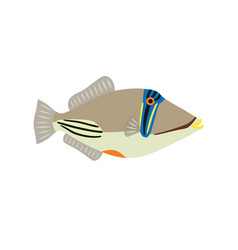 picasso triggerfish fish icon on white background vector image