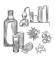 Set gin in hand drawn style on white background vector
