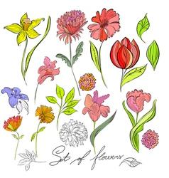 sketch of flowers vector image