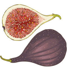 Two ripe figs whole and in cross section vector