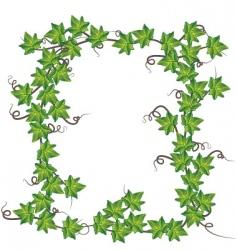 green ivy vector image