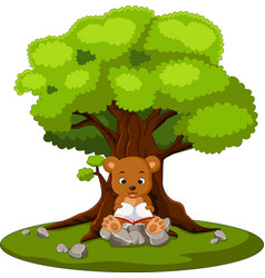 Bear reading book and sitting on the stone vector