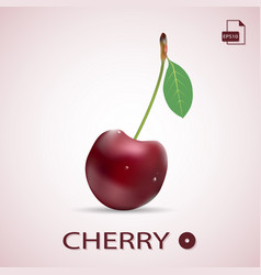 single ripe red cherry with a leaf isolated on a vector image vector image