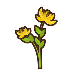 cartoon yellow lily flower natural vector image