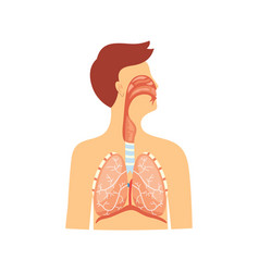 Anatomical medical scheme respiratory system vector