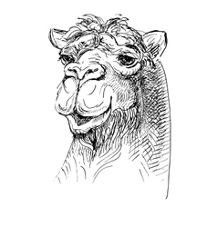 Artwork camel sketch black and white drawing vector