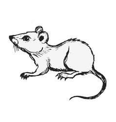 Domestic mouse vector
