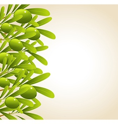Green olive background vector image