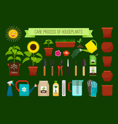 Houseplants care process icons vector