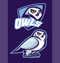 Mascot of white owl with sport style vector