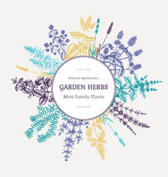 mint plants wreath summer herbs retro design hand vector image