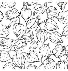 Phisalis seamless pattern vector