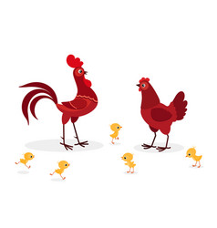red chicken family isolated on white background vector image