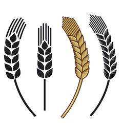 wheat ear icon set vector image
