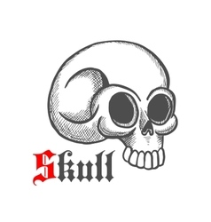 Monstrous human skull sketch symbol vector image vector image