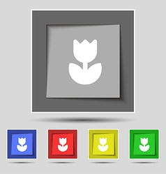Flower rose icon sign on the original five colored vector