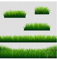 green grass borders big collection transparent vector image