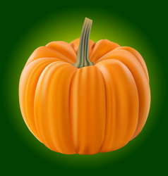 Pumpkin isolated on white realistic vector