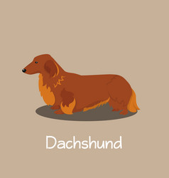 an depicting dachshund dog cartoon vector image vector image