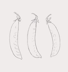 hand drawn sketch peas sketch set organic food vector image