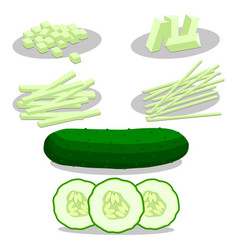 Green vegetable cucumber vector