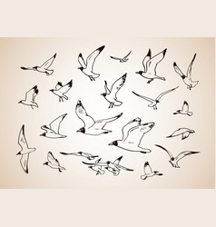 sketch of flying seagulls set of silhouettes of vector image