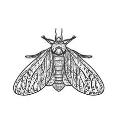 Clothing moth sketch vector